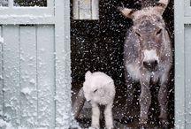 téli ünnepek