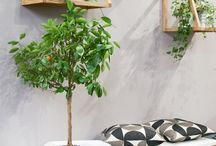 Interiør: Tips og inspirasjon uterom, hage og terrasse
