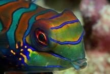 Life : Fishes, sea, corals, crabs,
