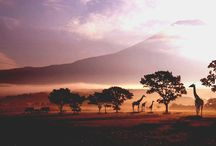 アフリカ/Africa / by trippiece
