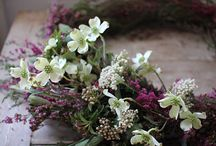Gardening/Flowers/Plants