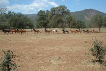 Sheldon Horses 5-9-15 / Pictures of the Sheldon Horses on 5-9-15