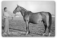 Paarden / Artikelen voor de wei, paarden