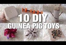Guinea Pigs!!