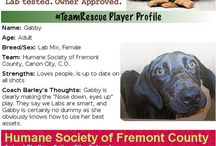 Pet Products / The Humane Society of Fremont County wants to spotlight pet products and pet product companies that support the adoption of shelter and rescue animals. http://www.humanesocietyfremontcounty.org/