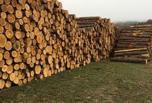 Northern White Cedar / Northern White Cedar in many of it's natural forms, which will be used to craft home decors.