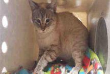 CAST OUT CATS / CATS NEEDING HOMES....MOST NEEDING HOMES D E S P E R A T E L Y ! ! !