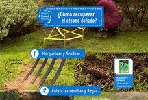 jardineria / plantas de la temporada