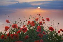 fields of love