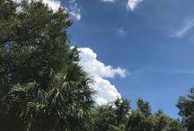 Florida | Home Life