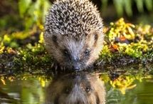 Wild / Inspirational and pretty nature pictures. Animals, plants, landscapes...