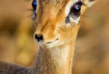 True nature animal inspiration