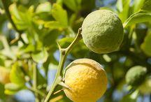 Pflanzenwissen / Hier erfährst du spannende Fakten über Pflanzen & die Wirkung der ätherischen Öle von PRIMAVERA.