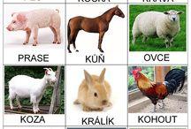 obrázky-zvířátka