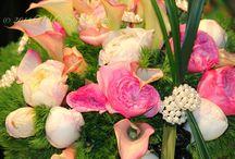 Philadelphia Flower Show / by NYCStyleCannoli