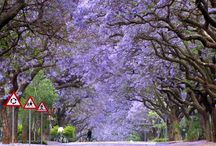 my homeland sunny south africa
