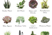 varieties of succulents