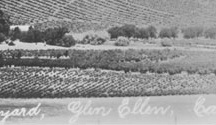 Kunde Family / For over a century, five generations of the Kunde Family have farmed our 1,850 acre-estate in the heart of Sonoma Valley—a truly remarkable legacy in the modern age of California winemaking. A fervent, forward-thinking vision of land stewardship and sustainability began over one hundred years ago, and has been shaped with each successive generation.