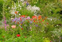 Garden / Ideas for our cottage garden
