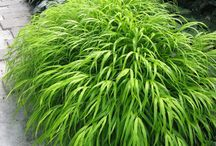 Perennials / Perennial Zones 4 and 5