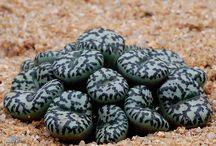 waterplants n cactusflowers