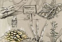 ботанические скетчи