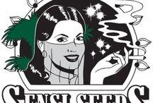 Sensi Seedrs