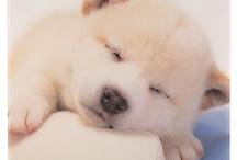 cute&lovely