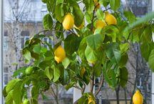 growing fruit & veggies inside