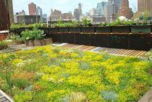 Cubiertas vegetales/ ajardinadas/verdes. Naturaleza en tu tejado!