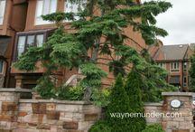 COLLEGE CONDOS / COLLEGE PARK - 1100 - 1120 Queens Avenue, Oakville, Ontario Canada $450K - $485K