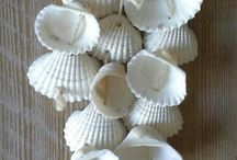 snäckor /sea shells