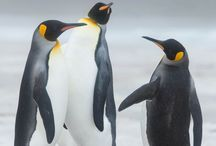 Falkland Island Gallery / A selection of Images taken in the Falkland Islands, part of United Kingdom Territory with incredible landscapes, picturesque views and an abundance of very hard to reach wildlife