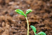 Gardening / by SimplyCanning.com