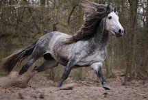 Horses..my fav Part II / by Brooke Smith
