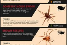 Spiders and other pests