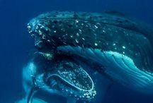 Baleines/Dauphins