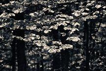 flora and fauna photography / flora and fauna photography | black and white analog photography - zwart-wit analoge fotografie, gescand van zwart-wit film op 4000 dpi door studio Care Graphics | © Charley van Doorn archief ©