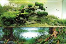 Landscape tanks