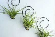 Air Plants & Other Green Stuff