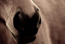horses / photographs of horses