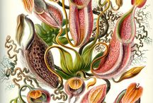 Nature illustrations / Nature