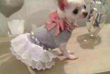 Dogs clothes