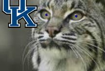 C-A-T-S CATS CATS CATS!! / University of Kentucky, baby!