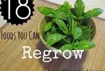 Garden, grow, food, upcycle
