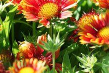 Love flowers / by Sissy McReynolds