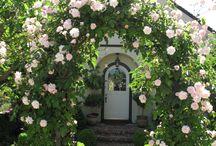 Pergole / Róże na pergole