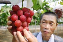 Méregdrága gyümölcsök