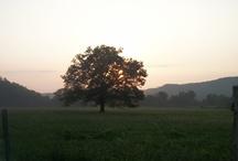 My nature shots