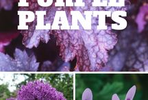 Purple Gardening / Our favorites all in shades of purple!